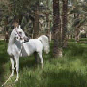 Doha horse, Qatar