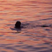 Young boy swimming close to the jetty in the sunset.